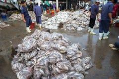 An Giang,越南- 2016年12月6日:与工作在TAC Cau捕鱼港口在黎明,我的工作者的被抓的鱼孔Kie三角洲省  免版税库存图片