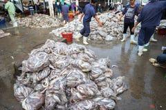 An Giang,越南- 2016年12月6日:与工作在TAC Cau捕鱼港口在黎明,我的工作者的被抓的鱼孔Kie三角洲省  库存图片