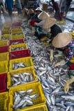 An Giang,越南- 2016年12月6日:与工作在TAC Cau捕鱼港口在黎明,我的越南妇女的被抓的鱼孔三角洲provin 免版税图库摄影