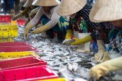 An Giang,越南- 2016年12月6日:与工作在TAC Cau捕鱼港口在黎明,我的越南妇女的被抓的鱼孔三角洲provin 免版税库存图片