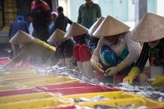 An Giang,越南- 2016年12月6日:与工作在TAC Cau捕鱼港口在黎明,我的越南妇女的被抓的鱼孔三角洲provin 免版税库存照片