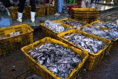 An Giang,越南- 2016年12月6日:在TAC Cau捕鱼港口在黎明,我的被抓的鱼孔Kien Giang三角洲省,在南部竞争 免版税库存图片