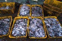 An Giang,越南- 2016年12月6日:在TAC Cau捕鱼港口在黎明,我的被抓的鱼孔Kien Giang三角洲省,在南部竞争 图库摄影