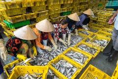 An Giang,越南- 2016年12月6日:排序鱼的越南妇女对篮子在TAC Cau捕鱼港口在黎明,我孔三角洲省 库存图片