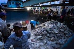 An Giang, Vietnam - 6 dicembre 2016: Pesci pescati ed attività di funzionamento nel porto di pesca di Tac Cau all'alba, me provin Fotografia Stock Libera da Diritti