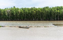 An Giang, Vietnam - Nov 29, 2014: Wide view of Tra Su flooded indigo plant forest stock photo