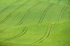 Giant abstract waves in green field Royalty Free Stock Images