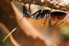 Giant ant Stock Images