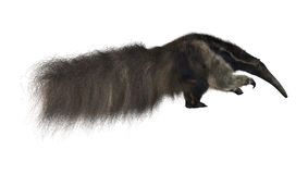 Giant Anteater Royalty Free Stock Photo