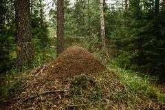 A giant anthill built by a forest ant. Murovenik in the forest. A giant anthill built by a forest ant. Murovenik in the coniferous forest, nature, brown, colony royalty free stock photos