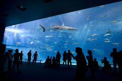 Giant Aquarium. World's biggest aquarium in Japan Royalty Free Stock Images