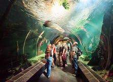 VIENNA, AUSTRIA - SEPTEMBER 8, 2017. Giant Arapaima fish swimming in an aquarium at Vienna Schonbrunn Palace Zoo Stock Image