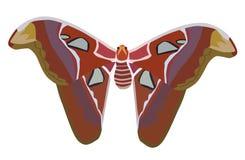 Giant Atlas Moth. Vector illustration giant atlas moth isolated on white Stock Photos