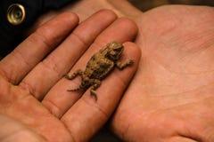 Giant baby lizard royalty free stock photos
