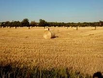 Giant bale haystacks Royalty Free Stock Photo