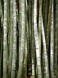 Giant Bamboo Background Stock Images