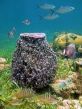 Giant barrel sponge Royalty Free Stock Photography