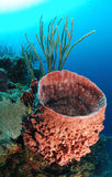 Giant barrel sponge. Underwater view of giant barrel sponge in tropical coral reef with blue sea background Royalty Free Stock Photos