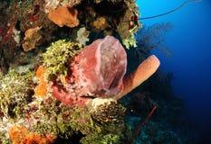 Giant barrel sponge Stock Photography