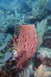 Giant barrel sponge Stock Image