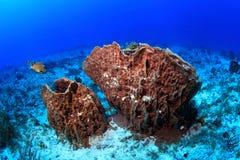 Giant barrel sponges Stock Photos