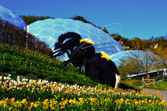 Giant Bee at The Eden Project in Cornwall, England Royalty Free Stock Images