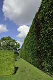 Giant beech hedge. View of giant beech hedge. Edinburgh botanic gardens Stock Photo