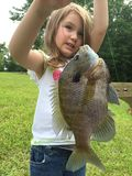Giant bluegill Royalty Free Stock Images