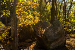 Giant Boulders along the wooded trails royalty free stock photo