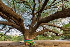 Giant Buddha tree Royalty Free Stock Images