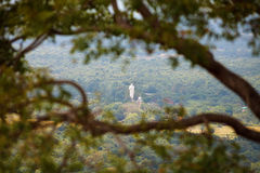 Giant Budha statue seen through tree branch. Sigirya, Sri Lanka stock photos
