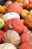 Giant bumpy gourd and pumpkin Stock Images