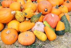Giant bumpy gourd and pumpkin Stock Photo