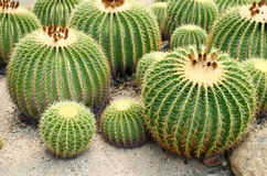 Giant cactus Stock Photos