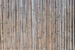 Giant cane fence. A fence made of reeds royalty free stock image
