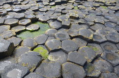 Giant Causeway Royalty Free Stock Images