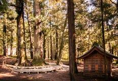 Giant cedar trees, Big pine tree, Kawaguchi Asama shrine, Kawagu Stock Image
