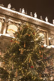 Giant christmastree. Before the House of Opera Budapest Stock Images