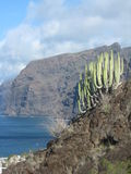 Giant cliffs. In Tenerife/ Los Gigantes royalty free stock photo