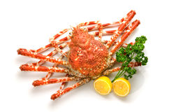 Giant crab. On white background royalty free stock photo