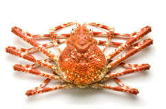 Giant crab Royalty Free Stock Photos