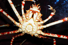 Giant Crab. Giant Red crab - sea monster Stock Image