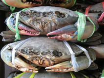 Giant Crab Claws Stock Image