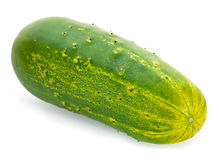 Giant cucumber overripe Royalty Free Stock Photos