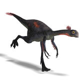 Giant Dinosaur Gigantoraptor Stock Photography