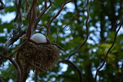 Giant egg in a birdsnest. Giant egg in a tiny birds-nest stock photography