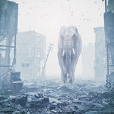 Giant elephant in destroyed city. Creative concept. Media mixed. Noise added Stock Photography