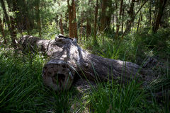 A giant fallen log in the Valley of the Ancients Stock Photos