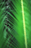Giant fern in Brazil Stock Photography