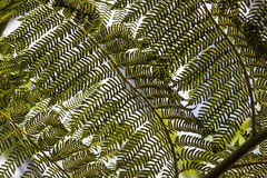 Giant fern leaves in tropical garden Stock Photo